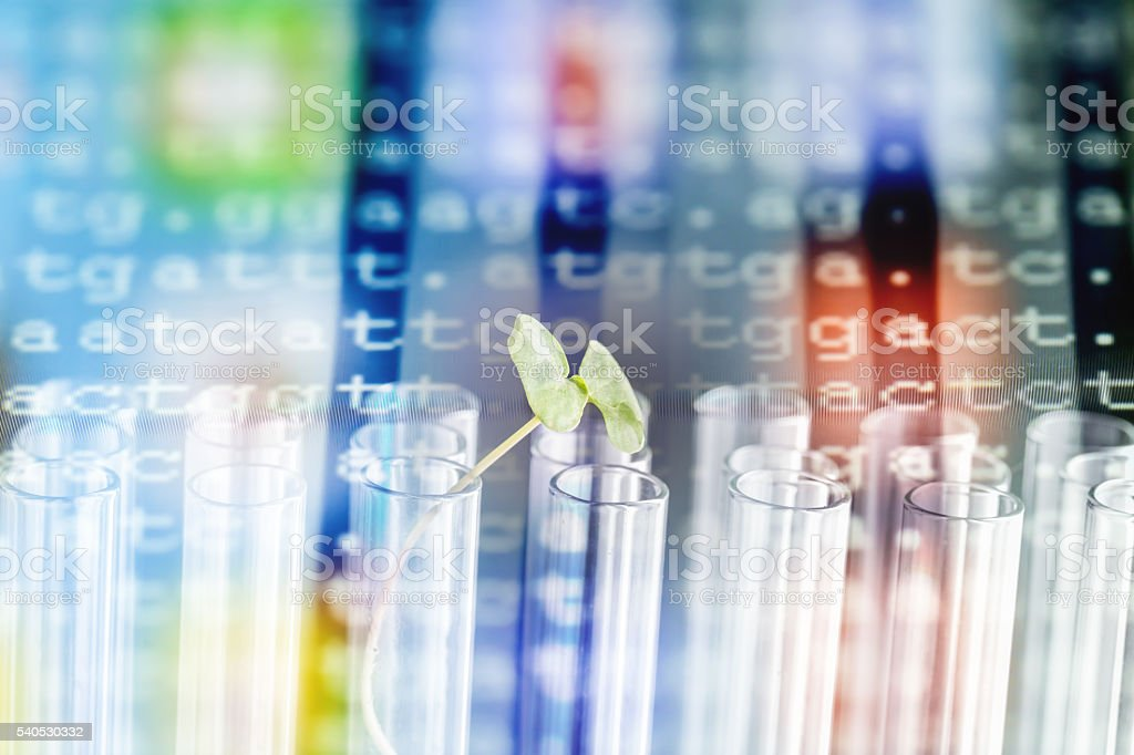 color coded DNA show with buck wheat sapling stock photo