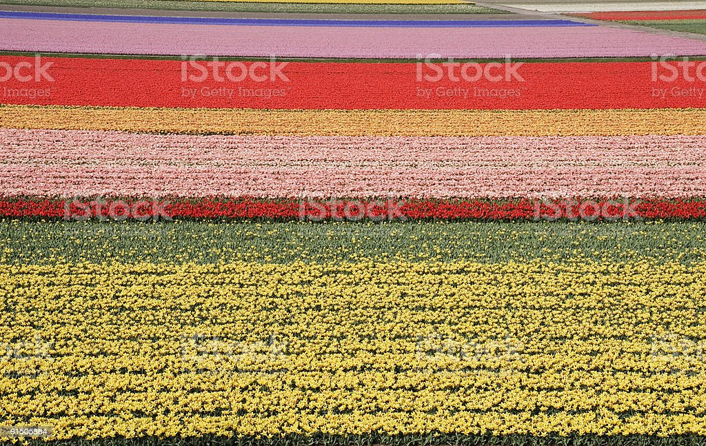 Color fields royalty-free stock photo