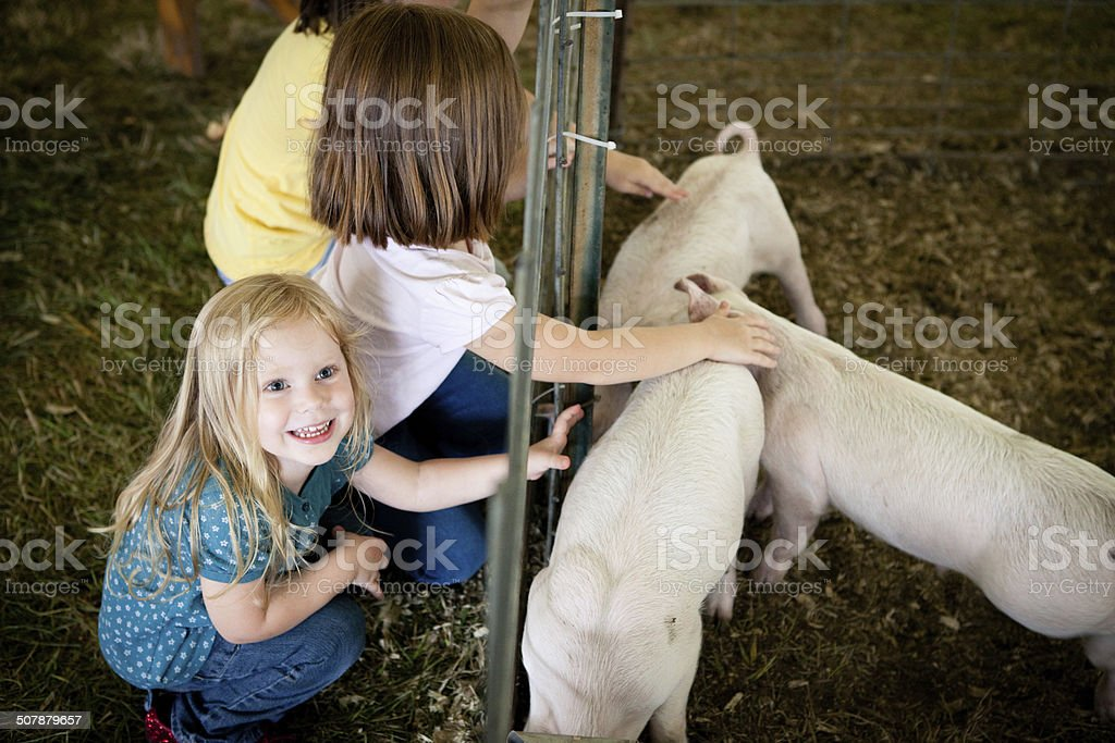 Color Image of Young Girls Petting Piglets at County Fair stock photo