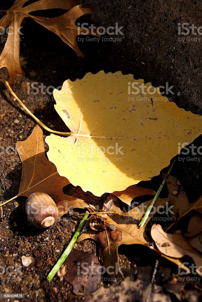 Color in the Gutter royalty-free stock photo