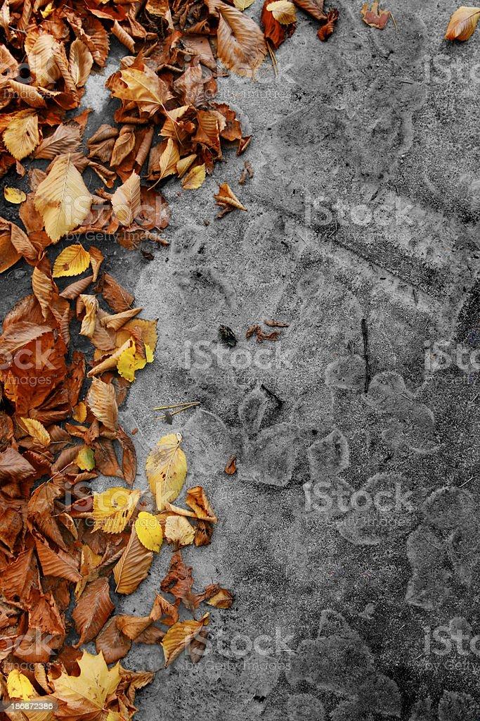 Color leaves on bw asphalt. royalty-free stock photo