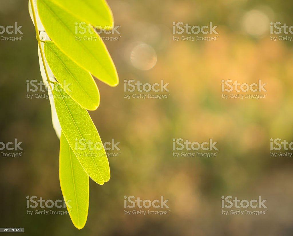 color of green leaf stock photo