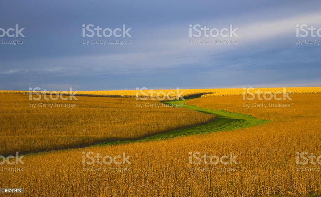 Color of Soy royalty-free stock photo