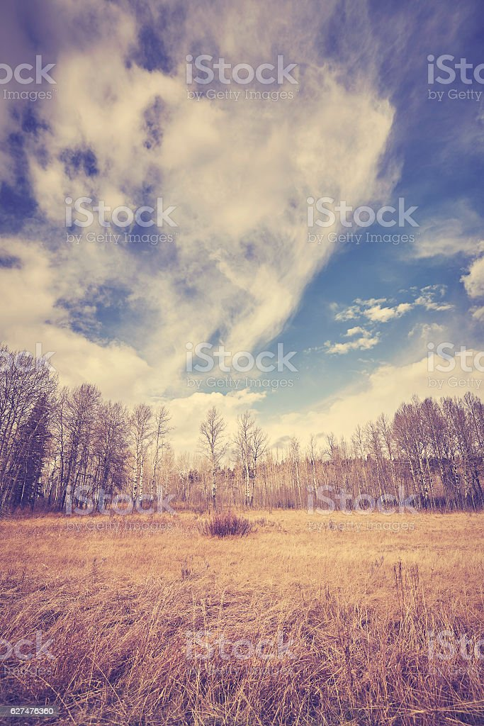 Color toned autumn landscape. stock photo