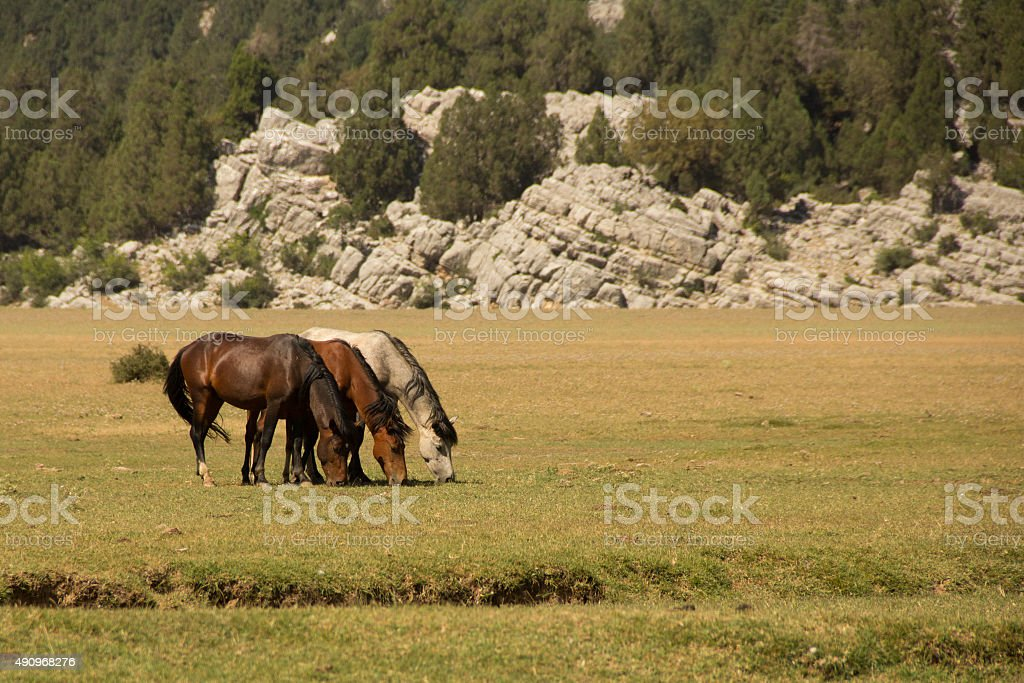 Color Transition Of Horses stock photo