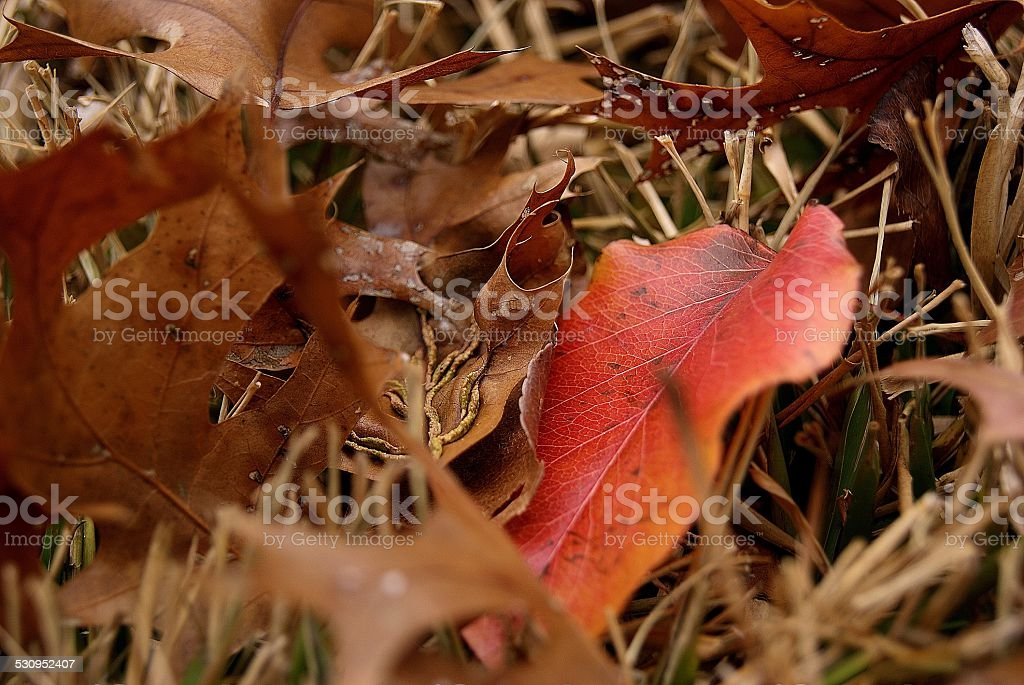 Color Under the Dead royalty-free stock photo