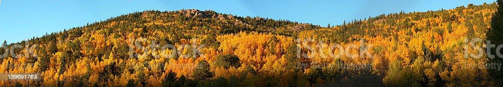 Colorado Aspen Fall Season Panoramic royalty-free stock photo