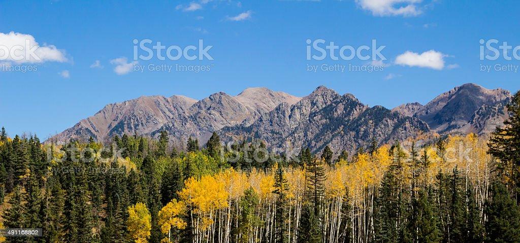 Colorado Aspens stock photo