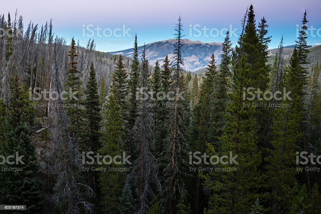 Colorado Forest stock photo