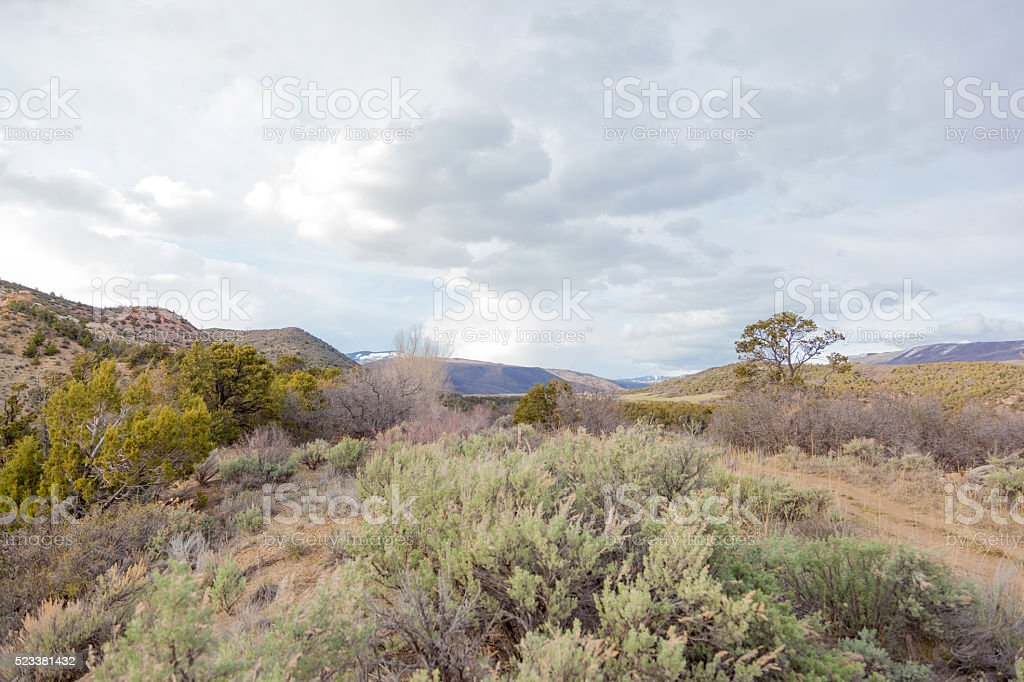 Colorado Grand Mesa in Spring foliage color change stock photo