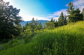 Colorado Hiking - Steamboat Springs