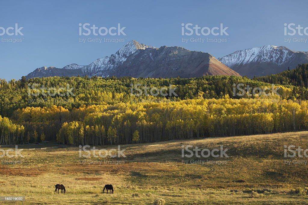 Colorado Horses and Mountains royalty-free stock photo