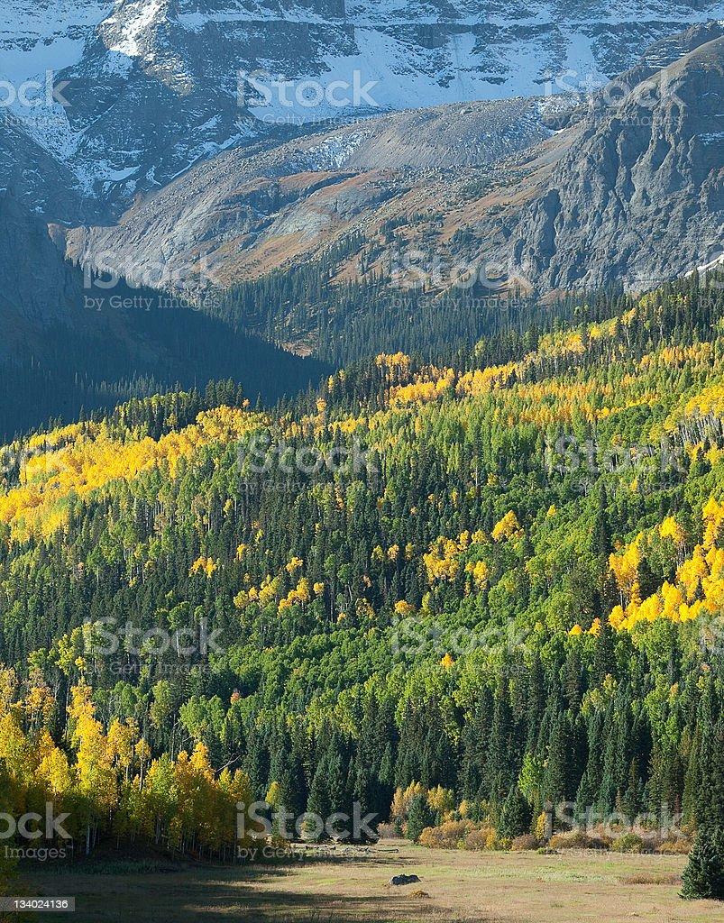 Colorado Mountain meadow photo libre de droits