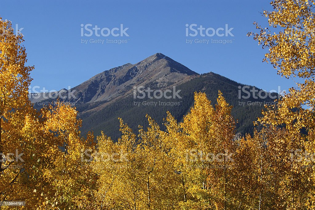 Colorado Mountains Framed by Aspen Trees in Fall royalty-free stock photo