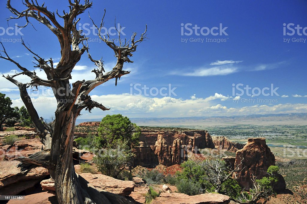 Colorado National Monument: Dead Juniper tree royalty-free stock photo