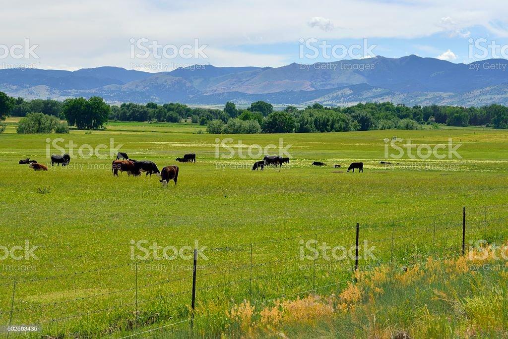Colorado Ranch stock photo