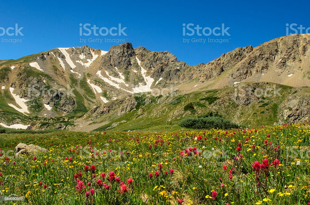 Colorado Rocky Mountain Wildflowers stock photo