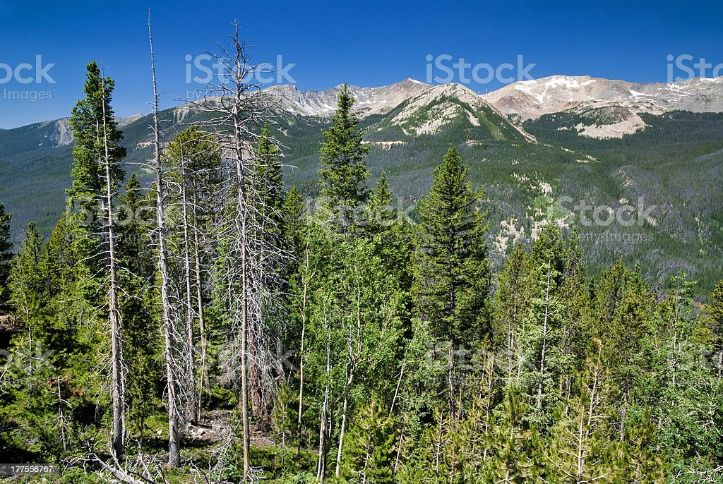 Colorado Rocky Mountains many dead trees stock photo