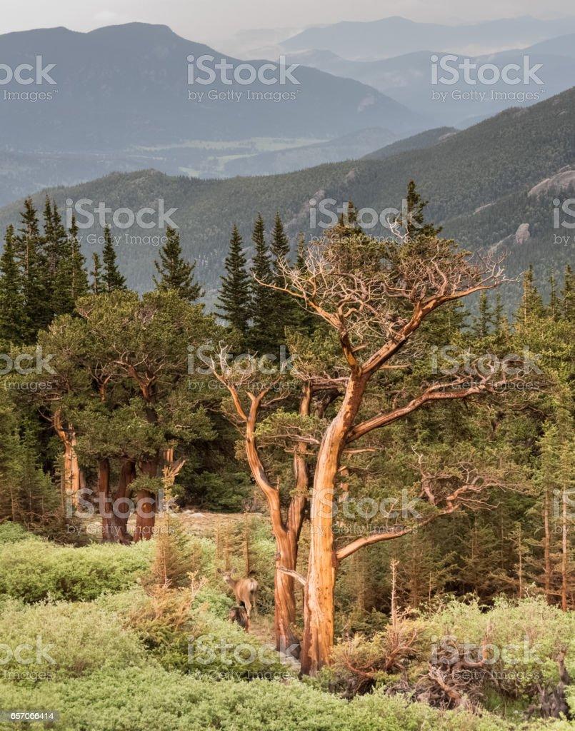 Colorado Scenic Beauty stock photo