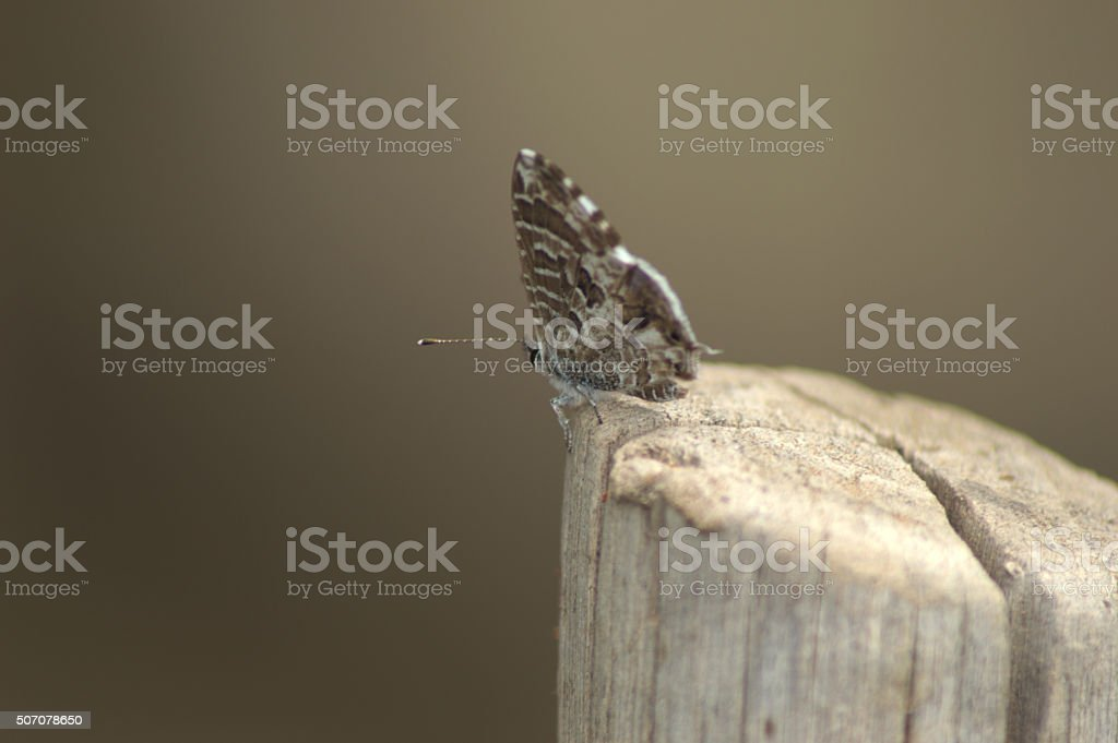 Colorcoded Butterfly stock photo