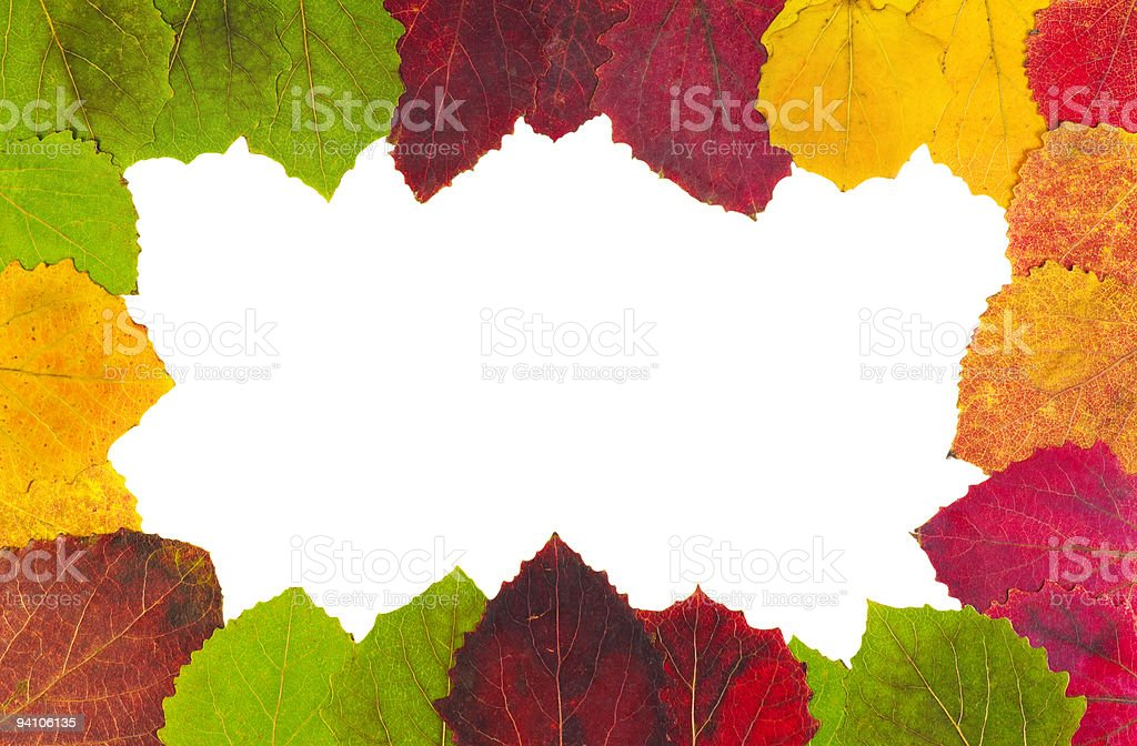 colored autumn leaves stock photo