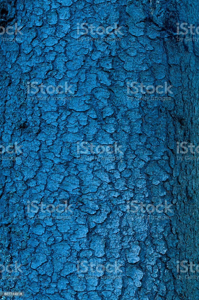 Colored blue wood bark for a abstract background stock photo