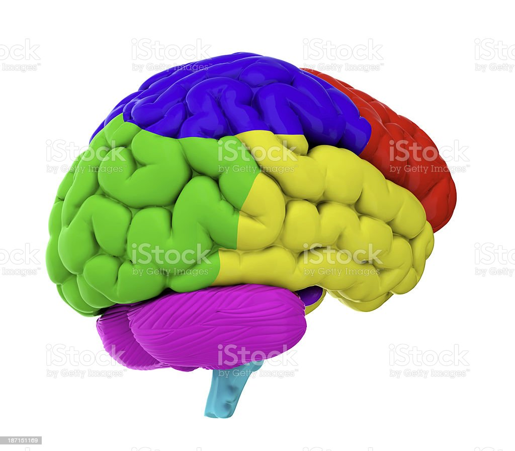 Colored brain royalty-free stock photo