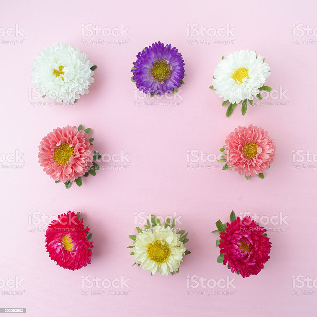 Colored chrysanthemums flowers background. Flat lay. stock photo