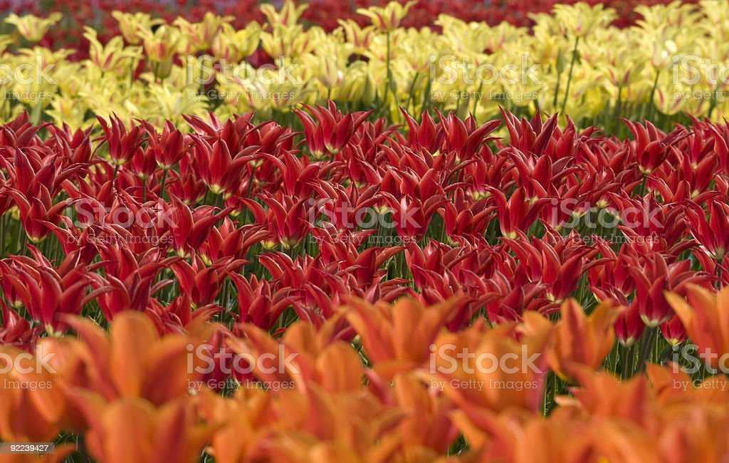 Colored different flowers stock photo