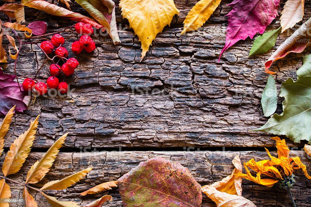 colored dry leaves and berries on a wooden background mockup stock photo
