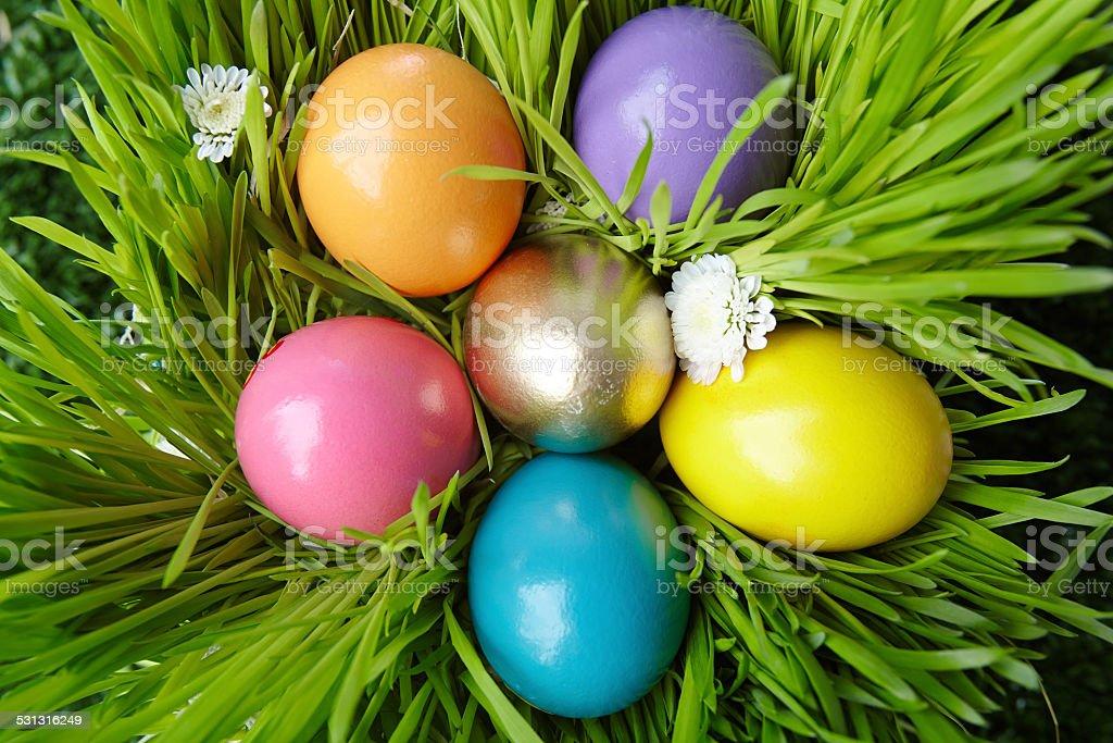 Colored eggs stock photo