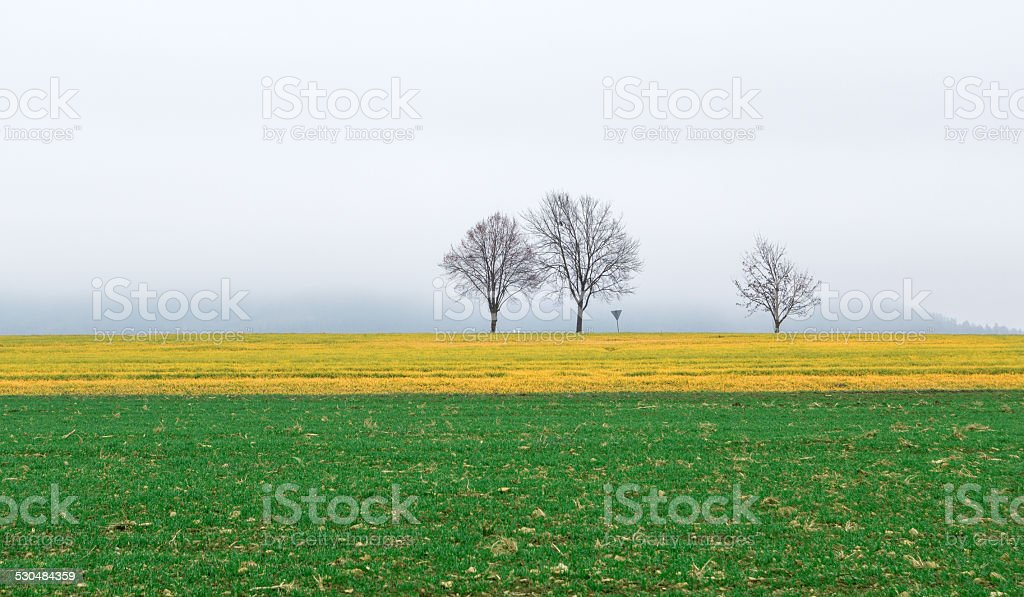 Colored fields on a foggy November day royalty-free stock photo