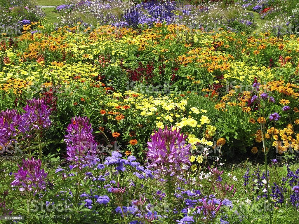 Colored flowerbed royalty-free stock photo