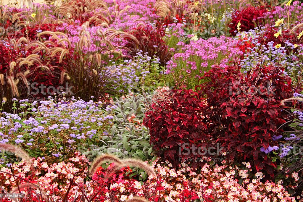 Colored flowerbed stock photo