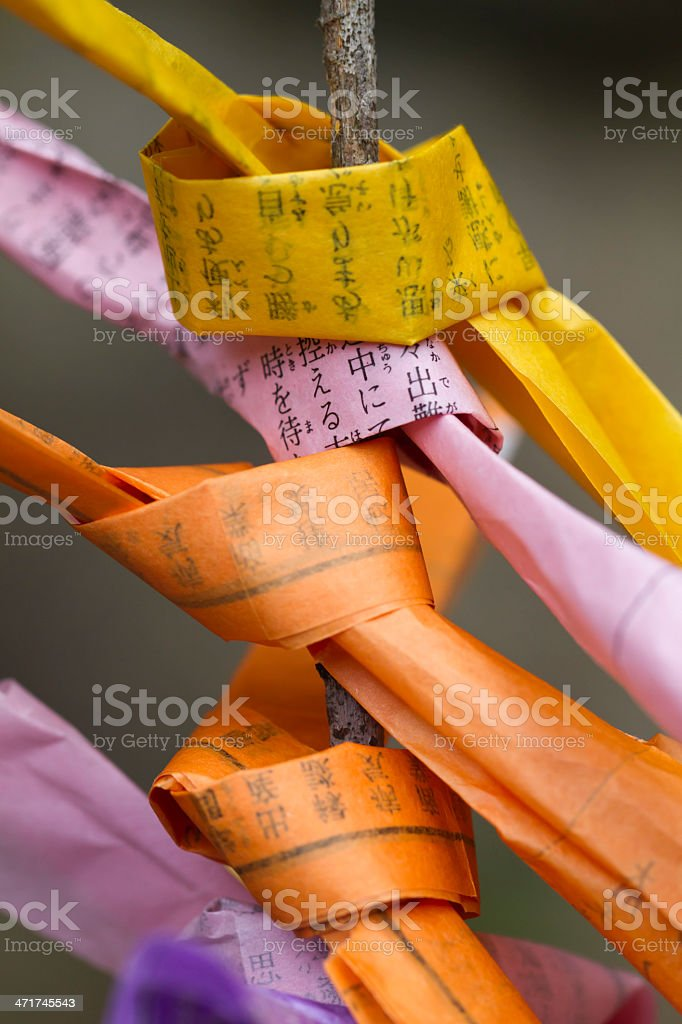 Colored Fortune Slips Tied to a Tree Branch royalty-free stock photo