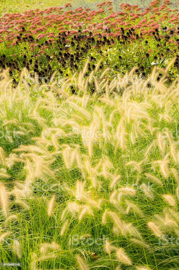 Colored grass in the park stock photo
