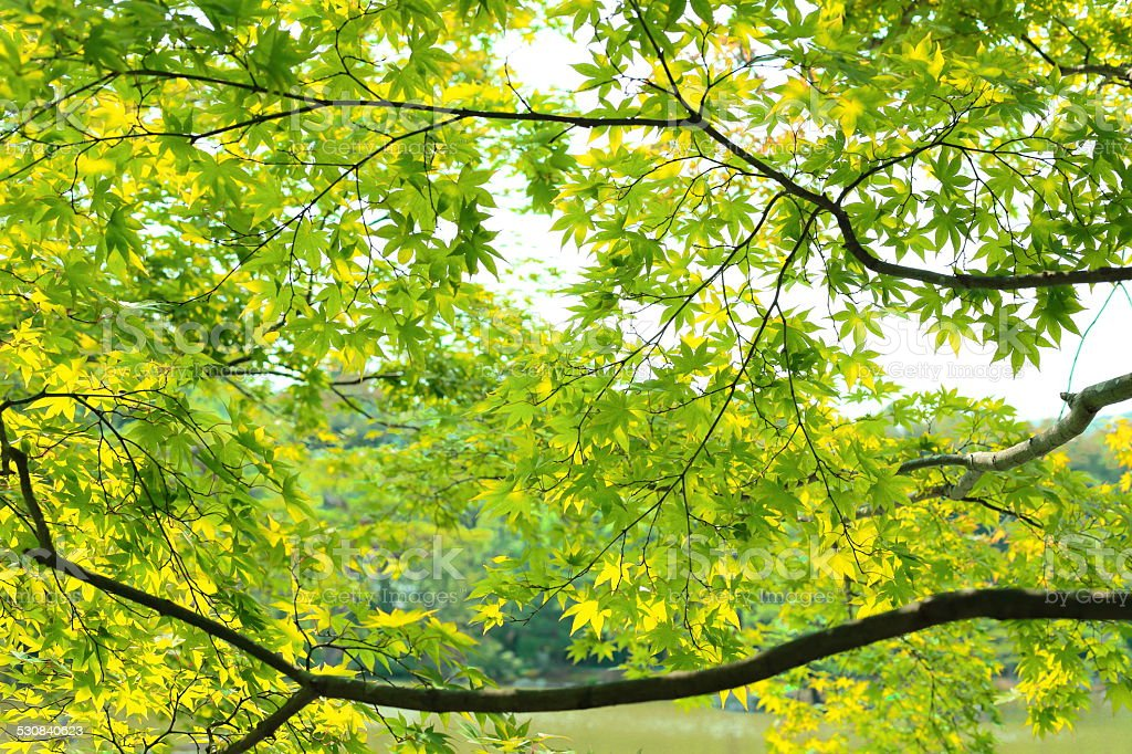 Colored leaves of Kyoto stock photo