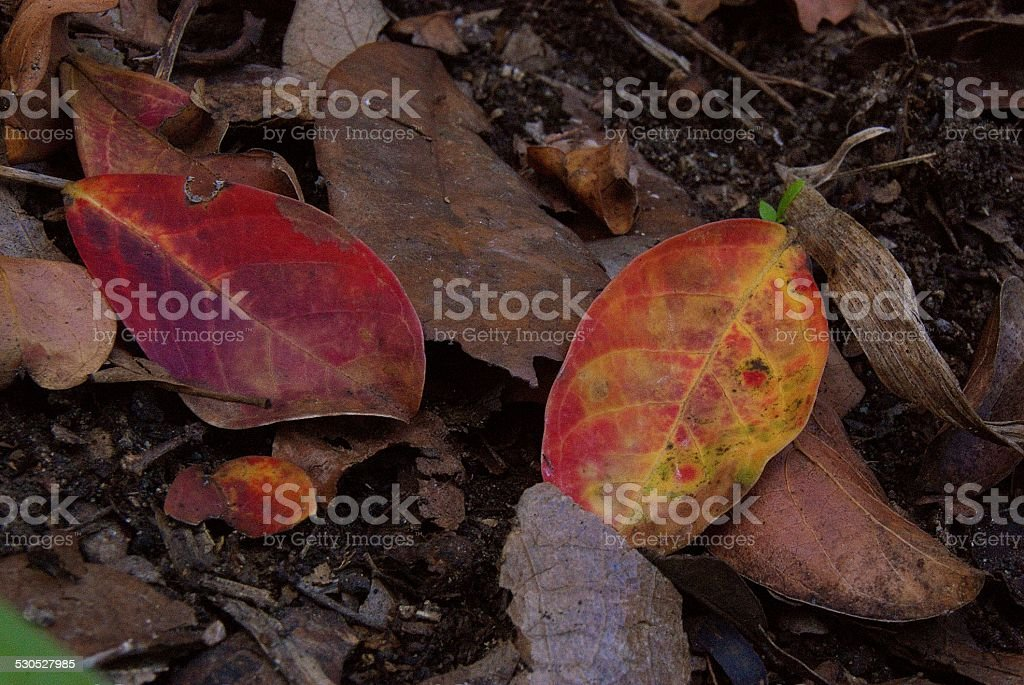 Colored Life royalty-free stock photo