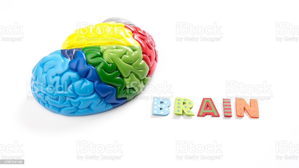 Colored map brain anatomy model with letter Brain stock photo