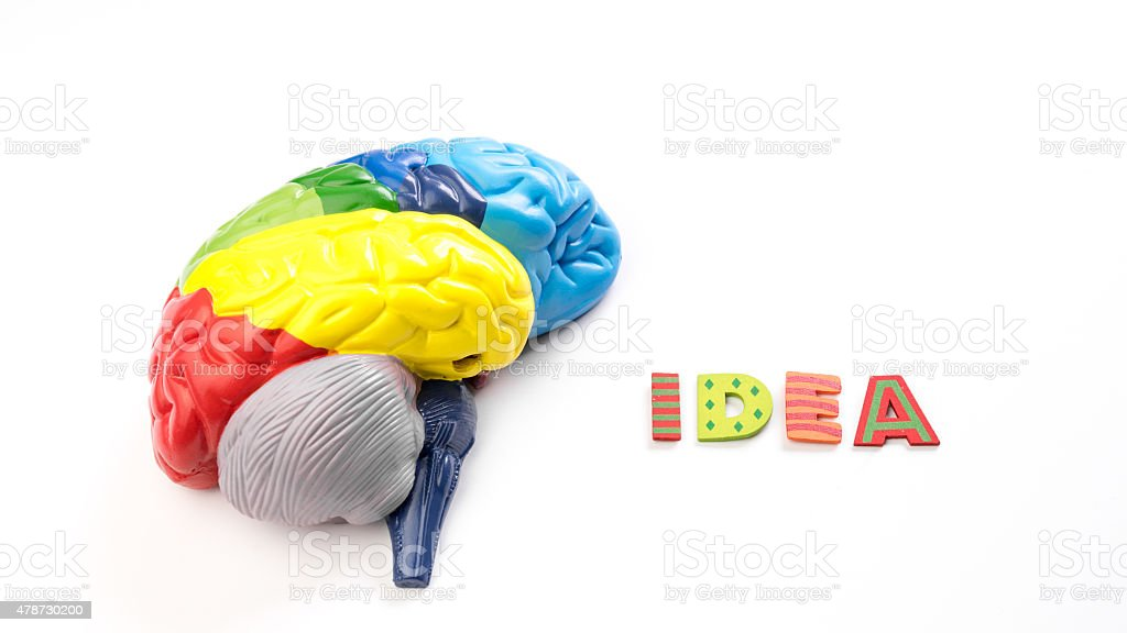 Colored map brain anatomy model with letter Idea stock photo