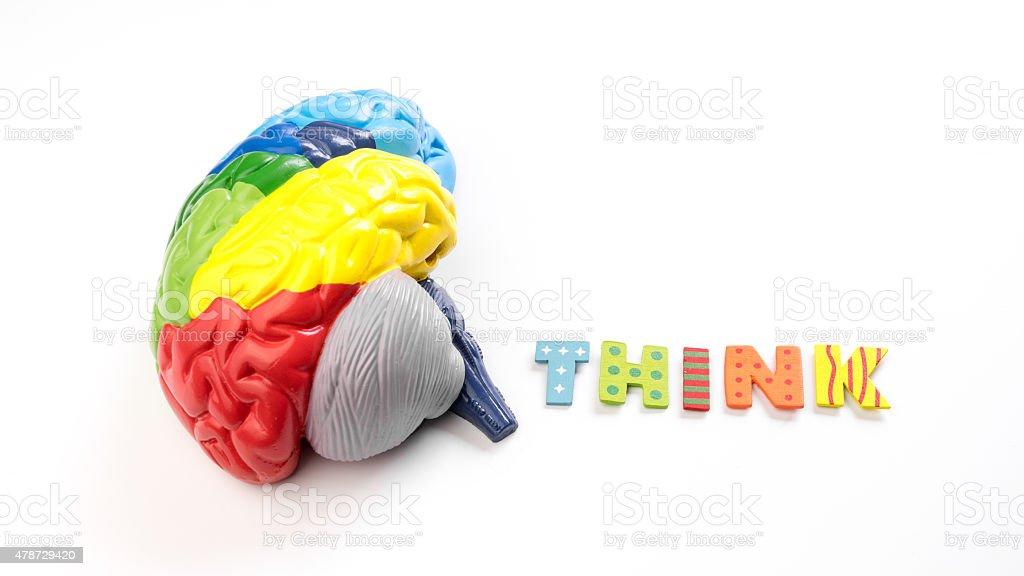 Colorido Mapa Cerebro De Anatomía Modelo Con Carta Creo Stock Foto e ...