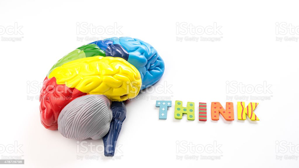 Colored map brain anatomy model with letter Think stock photo