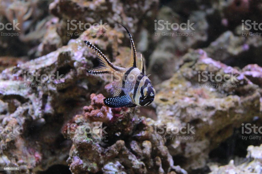 Colored seabed fish stock photo