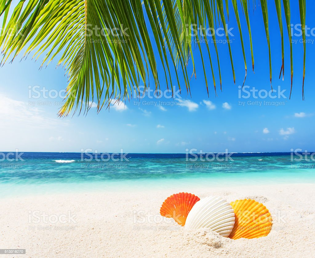 Colored seashells at sunny tropical beach stock photo