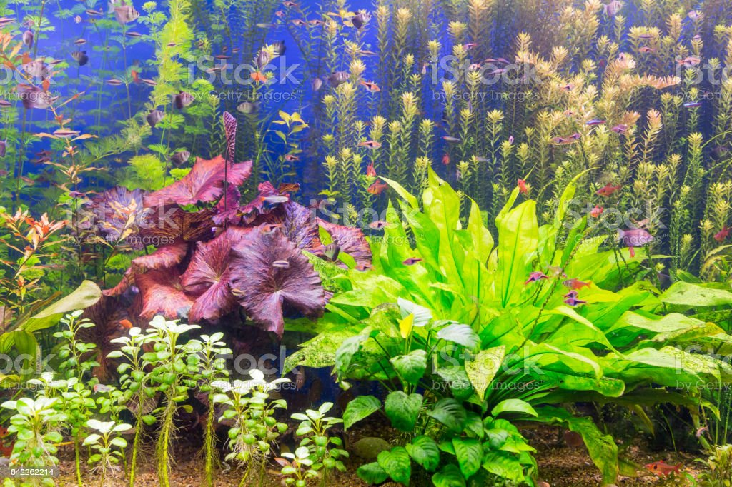 Colored seaweed and fish in the aquarium stock photo