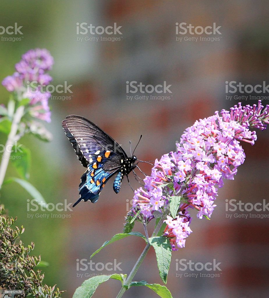 Colorfuf butterfly stock photo