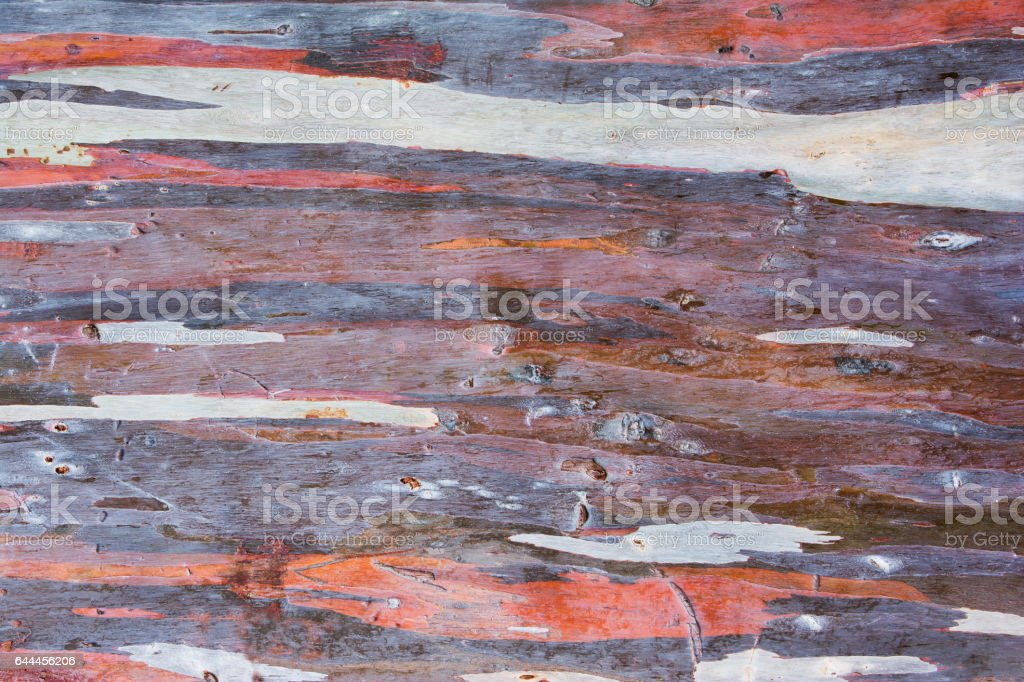 Colorful abstract pattern of Eucalyptus tree bark.Colorful eucalyptus tree bark stock photo