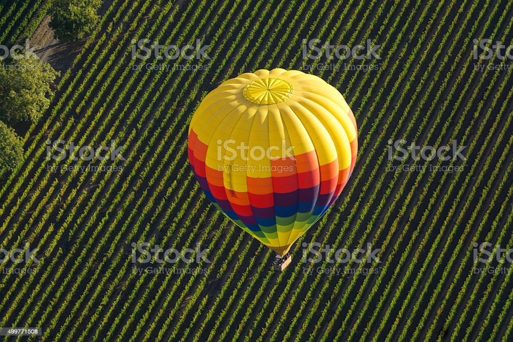 Colorful Air Balloon Floating over Vineyard stock photo