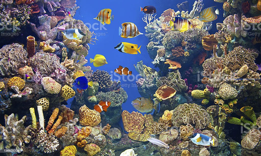 Colorful and vibrant aquarium life stock photo