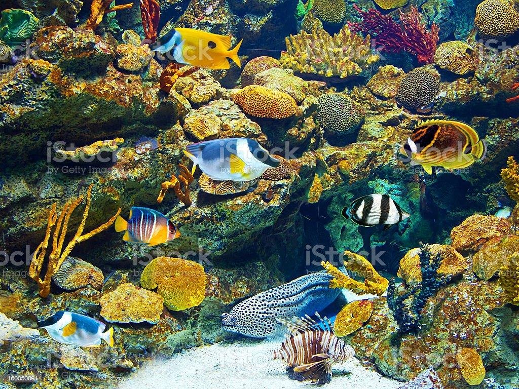 Colorful and vibrant aquarium life stock photo